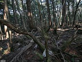 Aokigahara, hutan di kakai Gunung Fuji, tempat orang Jepang bunuh diri.