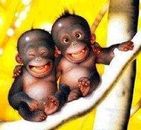 monyet-lucu