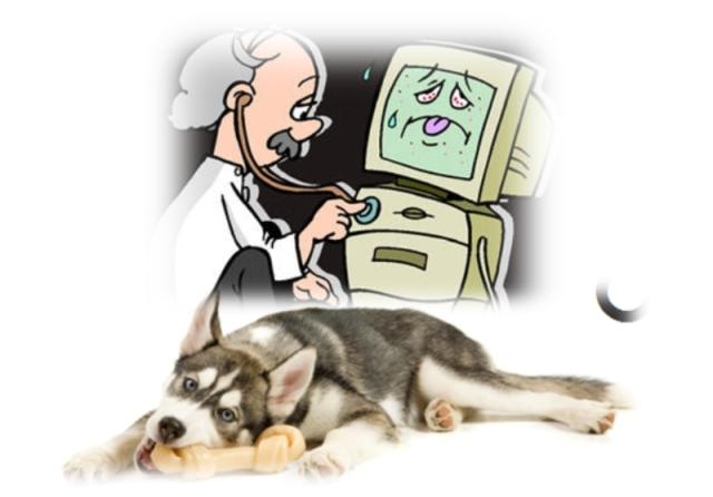 Anjing dan tulang