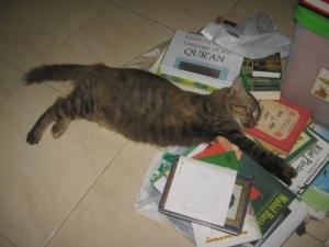Kucing n buku2