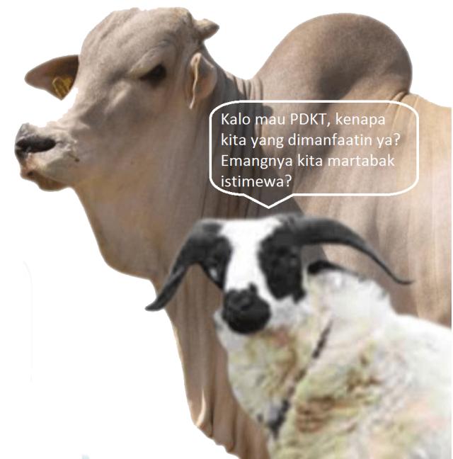 sapi-dan-kambing